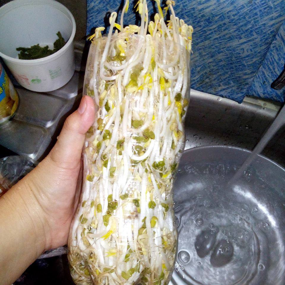 bean sprouts9