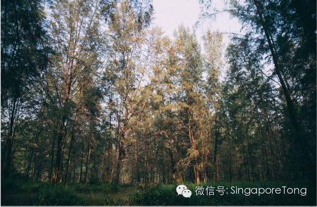 singapore travel (14)