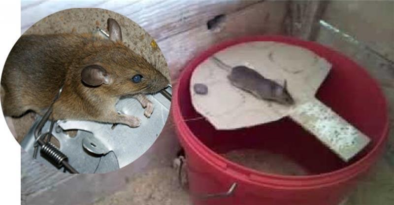 catch rat (1)