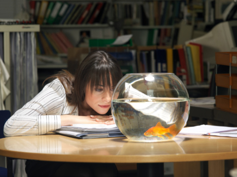 Female office worker sitting at table, watching goldfish in bowl