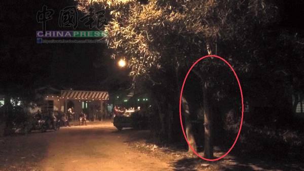 古城青年在闹鬼现场用手机拍的照片,照片中赫然发现在树木间出现一个白衣鬼。